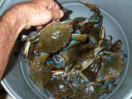 CT Fishing Report