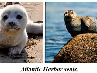 The Seals of Our Coastal Waters
