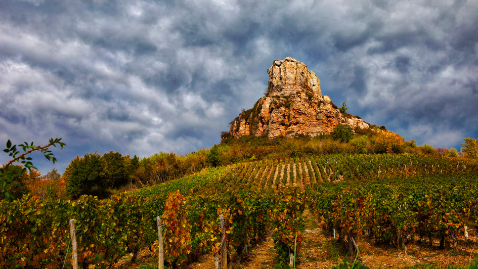 Mountain and vines