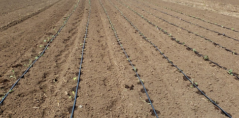 Irrigation%20and%20Planting_edited.png