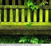 groen geworden tuinbank .jpg