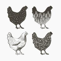 chicken art.jpg