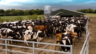 1,500 Cow Collar Deal in US helps drive Cork Agri-Tech company expansion