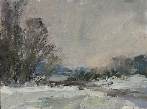 Sheep Grazing over Winter