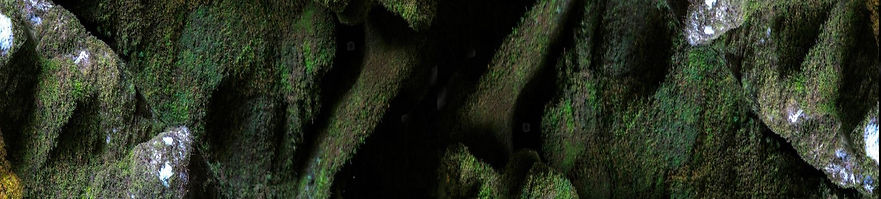 -moss-in-a-cave-in_edited.jpg