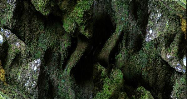 -moss-in-a-cave-in.jpg