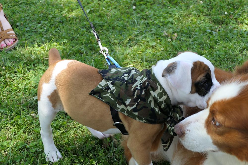 Doggie friends