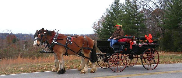 K & S Farm Horse Drawn Carriages, LLC, B