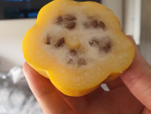 Papayuela: Una fruta deliciosa y medicinal pero poco conocida