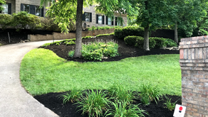 5 Tips to Keep Your Lawn Gorgeous During the Winter