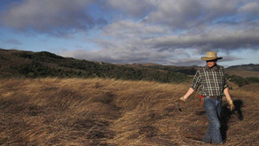 A sprinkle of compost helps rangeland lock up carbon