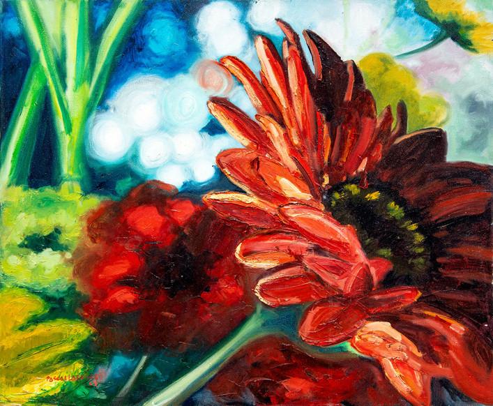 Red Gerbera daisy - 2009