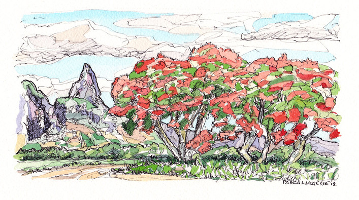 Flame trees in Bassin - 2018