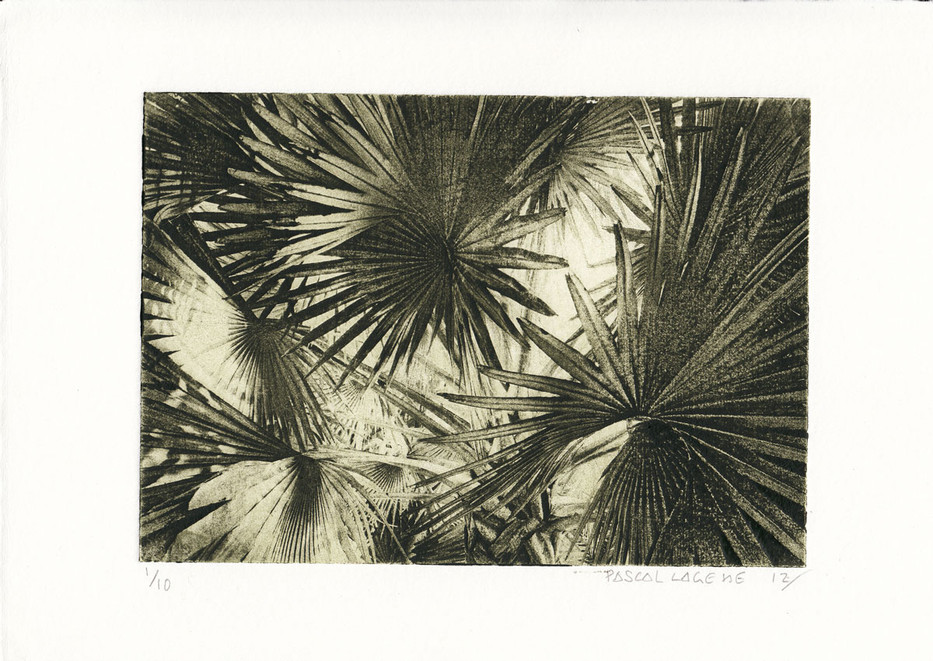 Latan palm trees