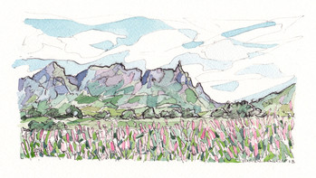 Pieter Both mountain and flowering cane fields - 2018