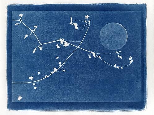 Luna tra irami #1 in blu, 2016
