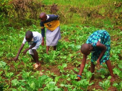 Kenya: Gardening Business