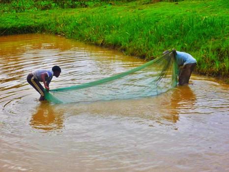 Kenya: Fishery Business