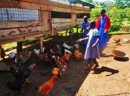Kenya: Chicken Raising Business