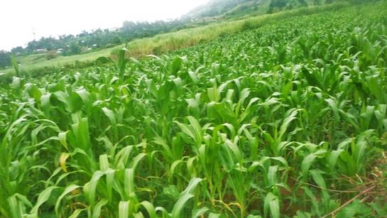 Kenya: Gardening Land Rental