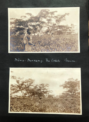 ANON. [ALBUM] A Photograph Album of A English Family Working in The Tea Industry