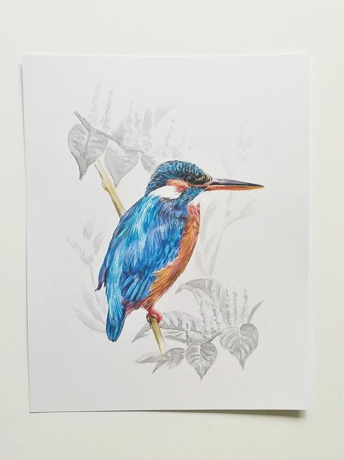 Kingfisher 8x10 artwork print