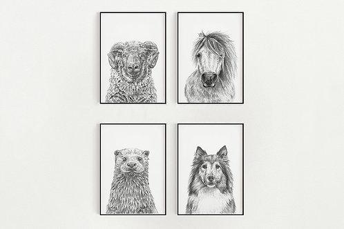Shetland Mammals 5 x 7 Prints
