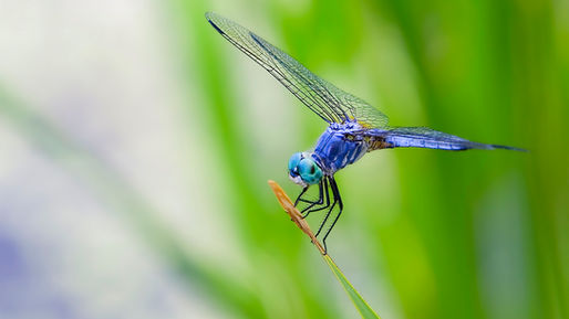 animals-blue-computer-dragonfly-backgrou
