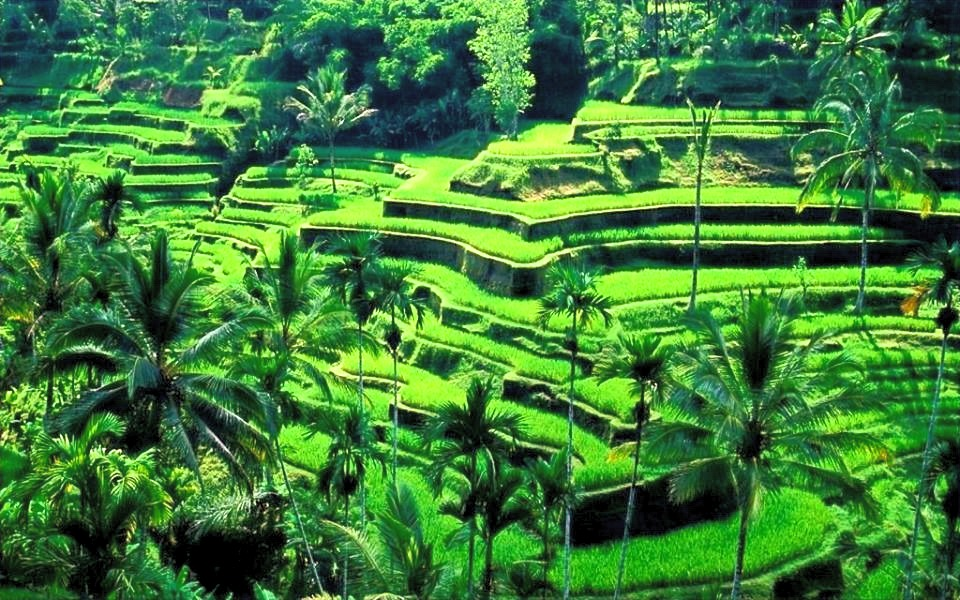 Bali%20Terraces_edited