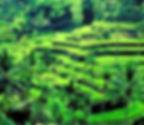 Bali%20Terraces_edited.jpg