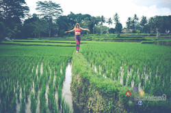 5elements dance in the paddy field
