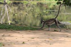 Monkey playing near yoga platform