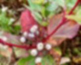 CE2C8A97-3115-4EBF-84D1-FC7C447EF31B_1_105_c_edited_edited.jpg