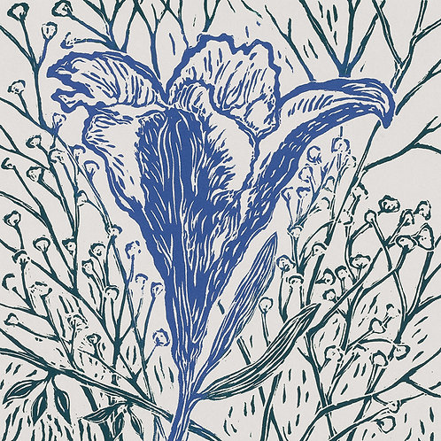 Lily- Cobalt