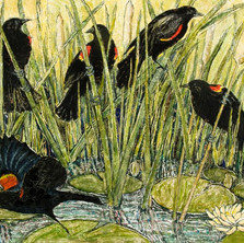 Red-Winged Blackbirds IV