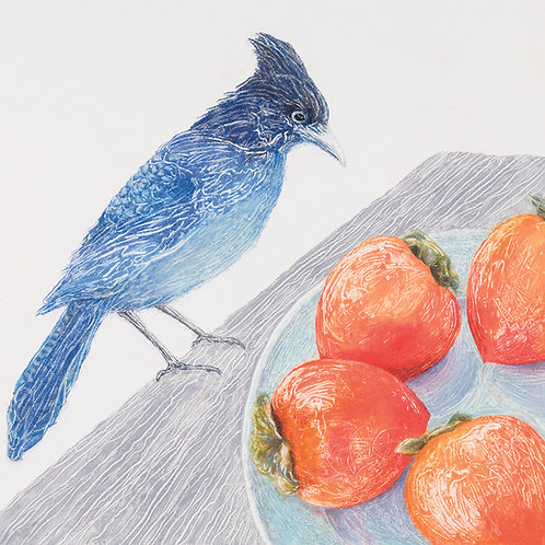 Steller's Jay and Persimmons