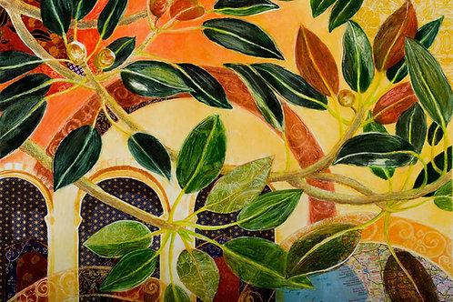Ficus Elastica-UCLA, folded card with envelope