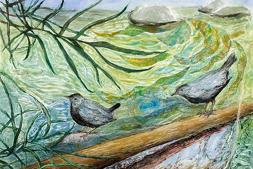 Tassajara Creek Dippers, folded card with envelope