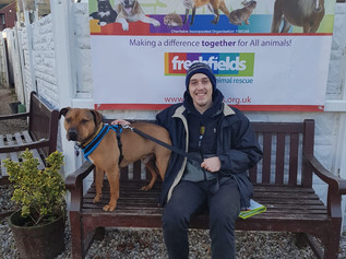 New home for Santos and new hope for Neo: Dogs injured in horrific axe attack have a future thanks t