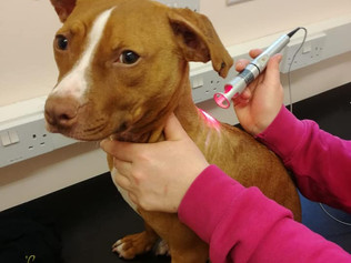 Puppy who suffered horrific abuse is now looking for a new home