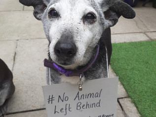 MP helps launch Freshfields Rescue's 'No Animal Left Behind' campaign
