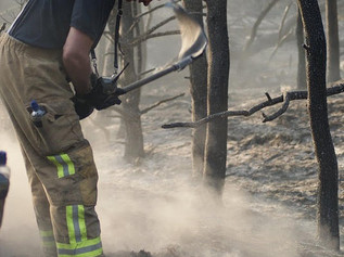 How The National Trust are Fighting Fires to protect The Pinewoods
