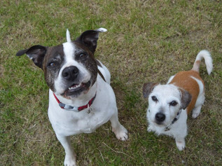 Missy and Jack desperately need a new home