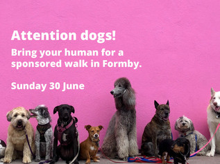 Dogs required to bring their humans for a fun day out and sponsored walk in Formby