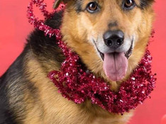 Freshfields Animal Rescue – No Animal Left Behind this Christmas