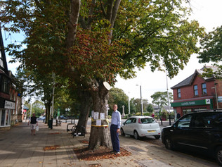 Statement from Sefton Central MP BIll Esterson regarding the two trees on Chapel Lane Formby