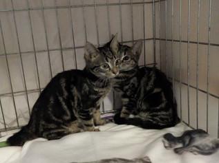 Kittens abandoned on Christmas Day at Freshfields