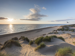 Threatened sand dunes given new lease of LIFE