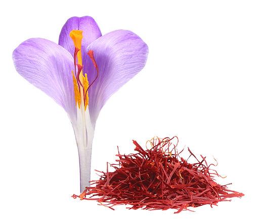 Flower crocus and dried saffron spice is
