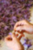 processing of saffron.jpg